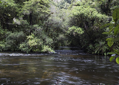 Aniwaniwa Stream (fantommst) Tags: lisaridings fantommst teurewera national part eastland nz newzealand hawkesbay northisland stream aniwaniwa water creek waterscape landscape