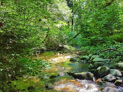 The creek in late spring (walneylad) Tags: murdofrazerpark northvancouver britishcolumbia canada park parkland urbanpark woods woodland forest urbanforest rainforest trees leaves ferns water sun sunlight sunshine shade shadows glow reflection june spring afternoon nature view scenery creek stream brook rocks branches moss green