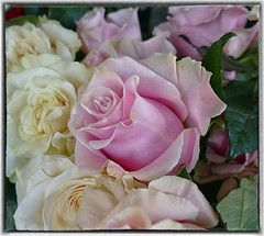 For Puddy 105 (steckphotos) Tags: pink rose flower seattle pike place market june