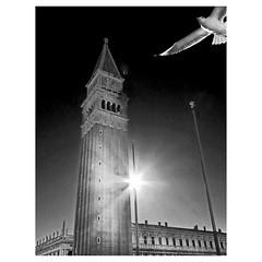 Venetian seagull (Robyn Hooz) Tags: gabbiano seagull venezia sanmarco piazza campanile marco veneto italia sole backlight back blackandwhite bianco nero biancoenero shoot