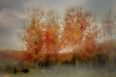 imagination of the photographer (s_gulfidan) Tags: watercolor 300faves digitalartpainting