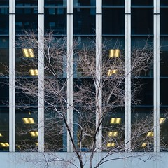 NYC Arch & Trees #24 (Ximo Michavila) Tags: nyc tree winter newyork city usa abstract windows building square 11 urban ximomichavila graphic architecture archdaily archidose archiref glass lines minimal contrast concrete