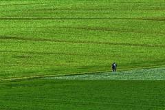 Looking at the map... (Claudia G. Kukulka) Tags: fields felder lines linien people menschen leute couple paar gras minimalism minimalismus