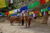 Дорога к Дзонгу (Oleg Nomad) Tags: бутан паро дзонг горы лес флаги азия гнездотигрицы bhutan paro dzong tigersnest asia travel