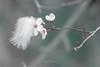 Springtime. (rudi.verschoren) Tags: bird feather blossem tree nature outdoor artistic mood colors contrast canon fairy flanders