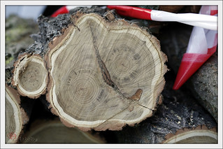 cut down tree in parts