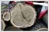 "cut down tree in parts (piktorio) Tags: berlin germany street tree trunk cutdown parts wood lines circles anatomy fallen nature urban petitruban texture bark piktorio detail ""annual rings"" rings eyes face"