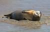 IMG_5832 cr (janharper) Tags: seals crouch roach estuaries leigh camera club