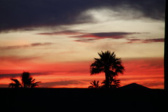 Sunset from Tempe Arizona (Explored--Thank you) (outdoorpict) Tags: arizona tempe sky reds orange palms clouds sunset outside warm silhouettes trees