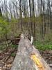 el-arbol (Ignacio45fotos) Tags: asheville carolina del norte