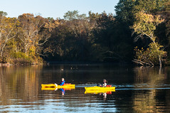 15-6927 (George Hamlin) Tags: maryland north east creek chesapeake bay water stream reflections kayak boating kayaker colorful yellow light shadow trees sky scenery recreation photo decor george hamlin photography