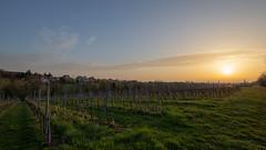 Sonnenaufgang im April HDR.jpg (Knipser31405) Tags: 2018 edenkoben frühjahr pfalz