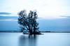 Tree series (Rolf Enderes) Tags: lakeconstance bodensee alter rhein alterrhein sunset sonnenuntergang see lake