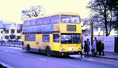 Slide 117-14 (Steve Guess) Tags: bus cranford hounslow london england gb uk regional transport lrt buslines lenwright route81 dms daimler fleetline ghv70n