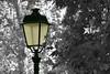 N° 321 (hans pohl) Tags: portugal lisbonne lampadaires lamps arbres trees noiretblanccoloré blackandwhite recoloured