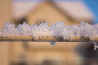 Snow Crystals on the Trellis Line