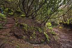 A change is as good as a rest. (f25design) Tags: tree trail path grass forest landscape vegetation soil nature wood road flora plant outdoors jungle park moss outdoor dirtroad woodland gravel leaf environment tenerife anaga spain