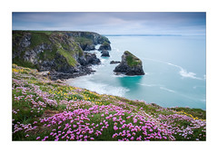 Bedruthin Wild Flowers (Dave Fieldhouse Photography) Tags: bedruthinsteps bedruthin cornwall cornwalllife coastal coast southwestcoastpath northcornishcoast cornish wildflower sea seascape cliff clifftop cliffs seathrift fujinon16mmf14 fuji fujifilm fujixt2 landscape overcast clouds cloudy spring may waves longexposure wwwdavefieldhousephotographycom mirrorless islands landmark newquay grass colour colourful hightide
