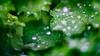 Drops (Bastian.K) Tags: bokeh water drop teardrop tropfen wassertropfen wasser sony gm 85mm 14 fe freelensing free lensing