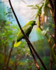 Jardín tropical (saparmo) Tags: seleccionar tropical aves bird cotorra jardín invernadero garden faunia