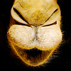 Kiss me / Baciami (Giorgio Ghezzi) Tags: camel dromedario giorgioghezzi