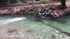 Video: Big Sur River Swim, Nala, Labrador Retriever, California (Nancy D. Brown) Tags: nala bigsur bigsurriver california video labradorretriever pfeifferbigsurstatepark labrador dog river montereycounty highway1 californiacoast instagram