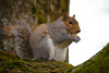 fluffy squirrel (pooja.anoop) Tags: seattle seattlewashington universityofwashington washington spring squirrel cuteness nikonusa animalland natgeoyourshot nikon nikonphotography animalphotography nature squirrelphotography happynationalpetday exploreloveshoot