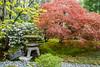 Seattle Japanese Garden (jeff's pixels) Tags: seattle seattlejapanesegarden garden nature nikon d850 maple
