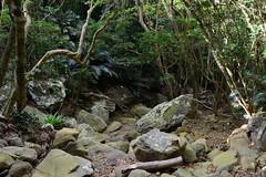 Dry Stream Bed (Bob Hawley) Tags: asia taiwan lilongshan pingtung nikond7100 nikon28105mmf3545afd mountains hiking forest trees trails ferns rattan
