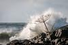 Fall Storm (macjeff*) Tags: landscape vancouverisland tofino community date skill pettingerpoint watermovement 2015 wavesd300s phototype month location britishcolumbia november waves