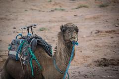 Vallee du Draa © Sophie Bigo - SBGD 2018-33 (SBGD_SophieBigo) Tags: photography artdirector freelance sophiebigo maroc trip travelphotography traveler trek morocco light
