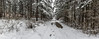 Winter walk in the woods (Milen Mladenov) Tags: 2018 bulgaria landscape montana panorama earlyspring forest latewinter nature path road season snow snowcovered snowy spring tree walk weather winter wood woods