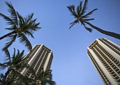 Up There Somewhere (fantommst) Tags: lisaridings fantommst palm trees tower hotel hyatt regency waikiki honolulu hawaii lookingup usa us