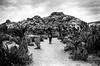 Human, circa 2018 (nateabrown) Tags: joshuatree desert cali california ilford iso400 blackandwhite grain landscape palmsprings rock geology minolta