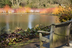 Wisley in March (Whitstable Photos) Tags: wisley rhswisley spring cornus