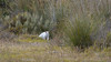My least favourite sight. (The Gullet) Tags: aldinga adelaide southaustralia nikon d500 300mmf4 cat domestic pest
