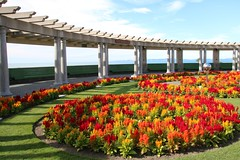 Salvias on show (Karen Pincott) Tags: flowers flowersplants salvias newzealand red architecture napier 1931 earthquake memorial