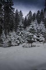 Winter wonderland (Alessio Bertolone) Tags: winter wonderland alessiobertolone trentino snow neve landscape paesaggio alberi trees nikon d7000 1685mm it ©