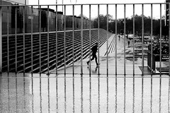 Between water line (pascalcolin1) Tags: paris13 bnf homme man pluie rain reflection lignes lines barriere barreaux barrier photoderue streetview urbanarte noiretblanc blackandwhite photopascalcolin 50mm canon50mm canon