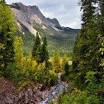 A Stream Flowing Through the Forest and Mountains of the Canadian Rockies (Yoho National Park) thumbnail