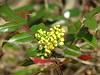 IMG_8130 (germancute) Tags: nature outdoor wildflower flower blume spring frühling wald wiese walk
