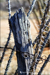 Fenced Friday (jgbirdmangrossinger) Tags: barb wire rusty fence thorns post joegrossinger