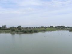 DSCN9963 (Gianluigi Roda / Photographer) Tags: wetlands waterbirds summer latesummer 2012 landscapes naturalparks oasi