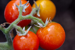 Tomato Vine (Nonnaof4) Tags: macromondays allnatural tomatoes red green macromademoiselle freetheme 2018onephotoeachday