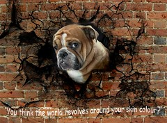 You think the world revolves around skin colour? (jesulvis) Tags: worldrevolves skincolour quotes politics quotation conservative mp maximebernier dog thoughts brickwall animal pug publicdomain hole canada