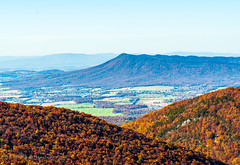 Massanutten from Two Mile Run Overlook - Mile 76.9, Skyline Drive, Shenandoah National Park, Elkton, VA (Paul Diming) Tags: pauldiming landscape mountains shenandoahnationalpark blueridgemountains elktonvirginia shenandoah dailyphoto blueridge virginia fall foliage elkton skylinedrive massannutten twomilerun twomilerunoverlook snp d5000 mountain unitedstates us