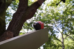 (DaftBence) Tags: outdoor colorful sony alpha a6000 7artisans manual