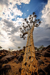 Namibia: Quivertree forest (Exper!ence it) Tags: africa namibia quivertree forest hiking 4x4 keetmanshop landscapes beauty nikon d750 1635mm