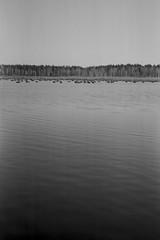 Lake in the Woods (serhiy.sereda) Tags: water lake woods trees waves film bw ilford fp4 rodinal