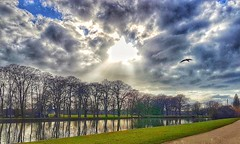 Enjoy your weekend Flickr friends!😊 (LeanneHall3 :-)) Tags: lake trees branches reflection green grass sky skyscape blue white grey clouds talkativeclouds cloudsstormssunsetssunrises sunshine sunrays seagull bird landscape eastpark hull kingstonuponhull samsung galaxys7edge